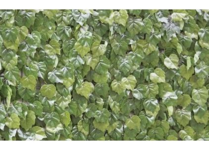 Wonder-Wal Artificial Wall Screening Virginia Creeper