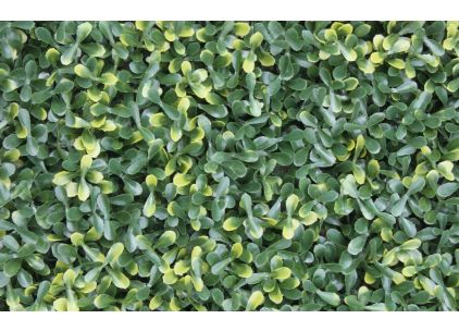 Wonder-Wal Artificial Wall Screening Variegated Buxus