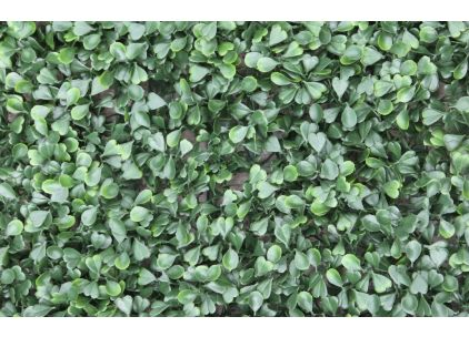Wonder-Wal Artificial Wall Screening Buxus