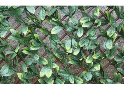 Wonder-Wal Trellis Screening Laurel Leaf 2m x 1m