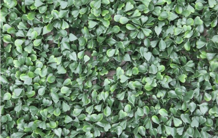 Wonder-Wal Artificial Wall Screening Buxus-1m x 1m