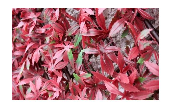 Wonder-Wal Trellis Screening Artificial Red Acer-2m x 1m