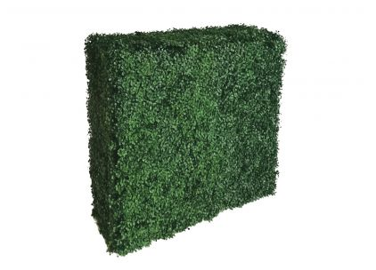 Buxus Hedge Large